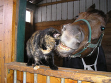 Cat and Older Horse